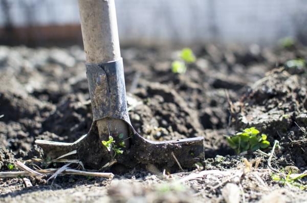 Sommer 2021 So bereiten Sie Ihren Garten auf die kommende Saison vor1