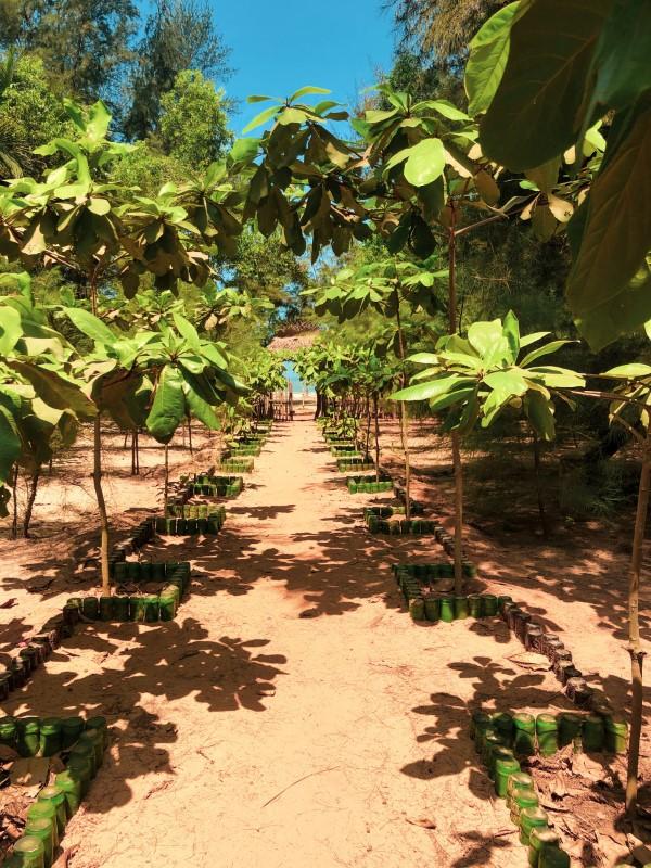 Teak Gartenmöbel und Sitzgruppen – Welche Vorteile bringen sie teakholz farm junge bäume