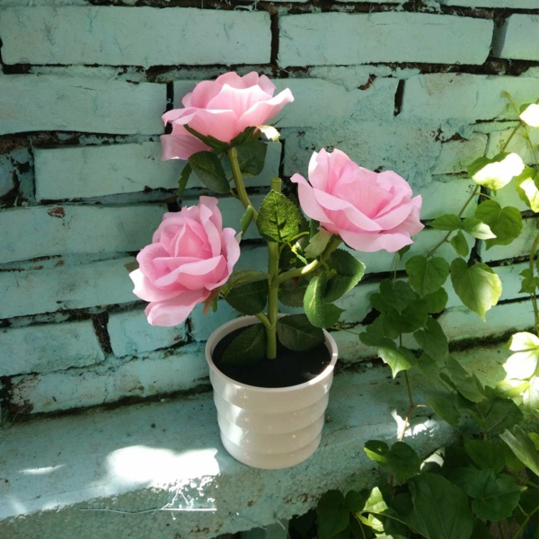Topfrosen Rosen im Kübel Gartenpflanzen Kübelpflanzen