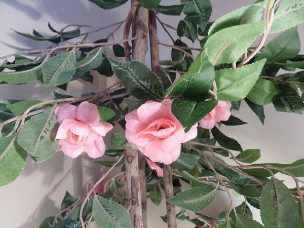 Topfrosen pflegen Rosen im Kübel Gartenpflanzen Kübelpflanzen