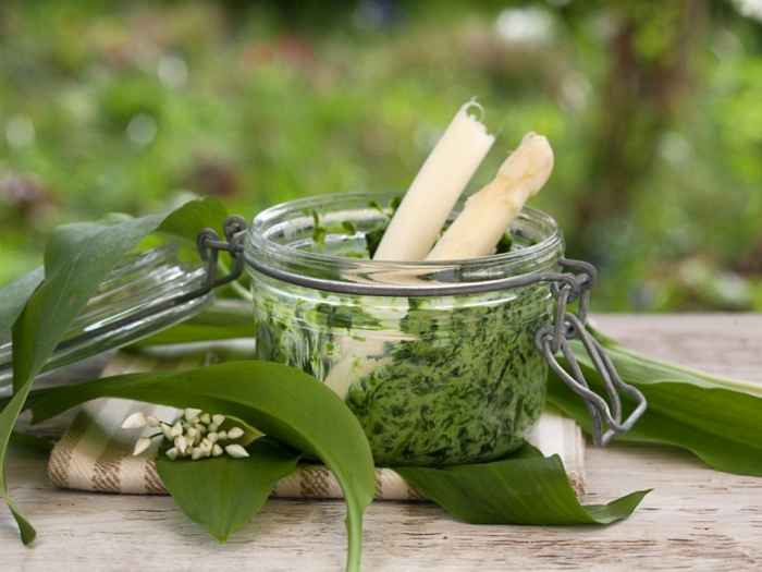 bärlauch rezepte vegan brennnessel pesto