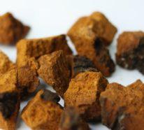 Warum ist Chaga Pilz so gesund und wie Sie davon profitieren können