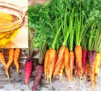 Karottenöl – was steckt hinter dem neuen Beauty-Hype?