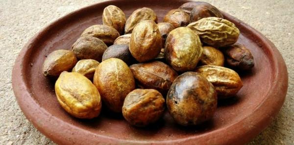 haritaki ernte gesunde früchte