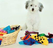 Hundespielzeug aus alten Socken basteln – 6 einfache Ideen zum Nachmachen