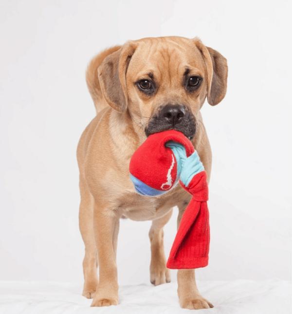 Hundespielzeug aus alten Socken basteln Haustiere