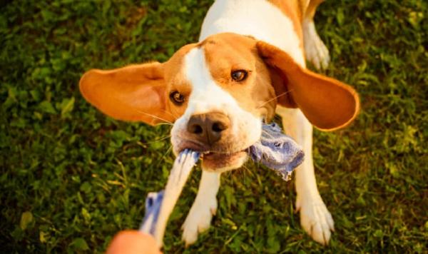 Hundespielzeug aus alten Socken basteln Hundespaß