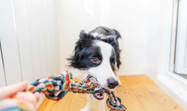 Hundespielzeug aus alten Socken basteln Spielen mit Hund