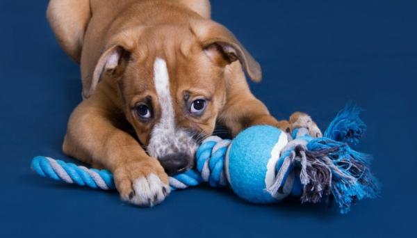 Hundespielzeug aus alten Socken basteln alte Socken