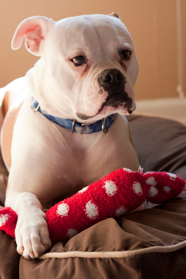 Hundespielzeug basteln DIY Spielzeug mit Socken basteln