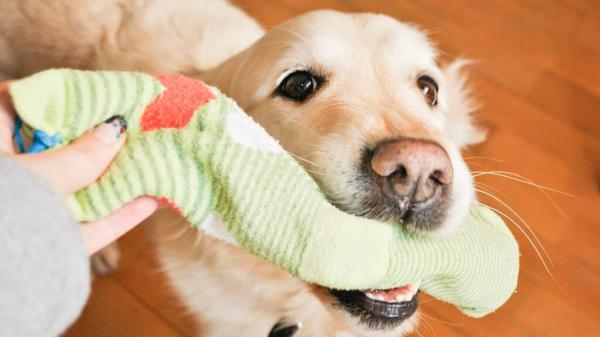 Hundespielzeug basteln Spielzeug aus alten Socken