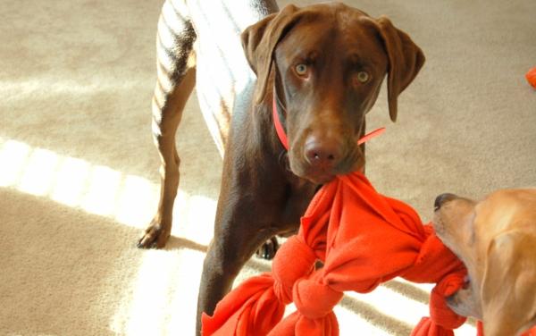 Hundespielzeug basteln Spielzeug mit Socken basteln