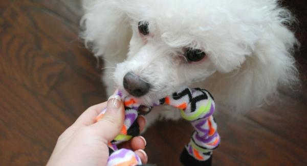 Hundespielzeug basteln aus alten Socken