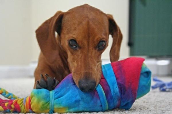 Hundespielzeug basteln mit Socken basteln
