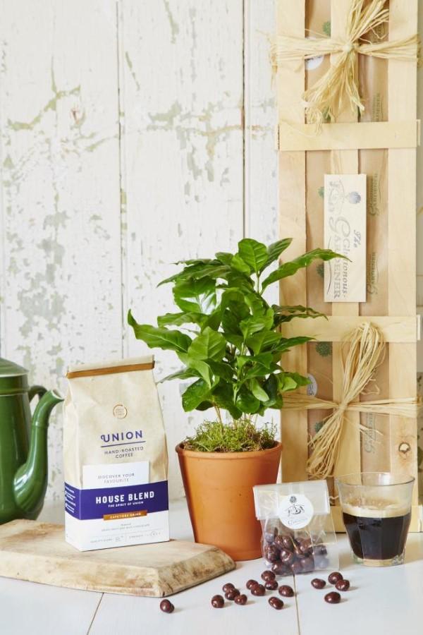 Kaffeepflanze Pflege Tipps und Wissenswertes für kaffeeliebende Hobbygärtner kaffee pflanze zierpflanze