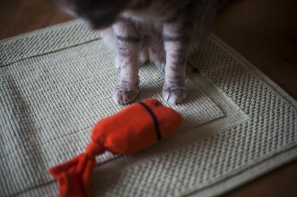 Katzenspielzeug Spielzeug mit Socken basteln Tierwelt