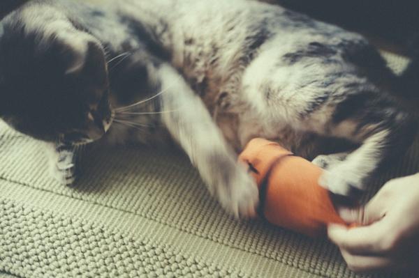 Katzenspielzeug selber machen Spielzeug mit Socken basteln