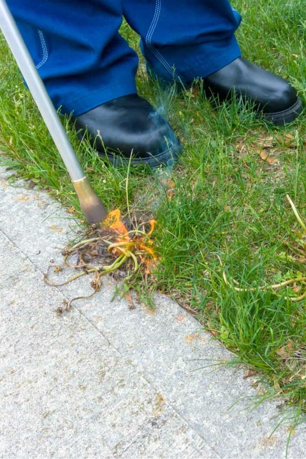Unkraut entfernen Unkraut jäten großflächig Unkraut entfernen Tipps Rasenkanten
