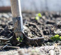 Unkraut entfernen: Einige effektive Methoden, wie Sie das Unkraut in Ihrem Garten jäten können