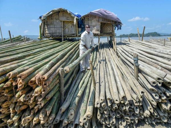 Wie schnell wächst Bambus Bambus ernten