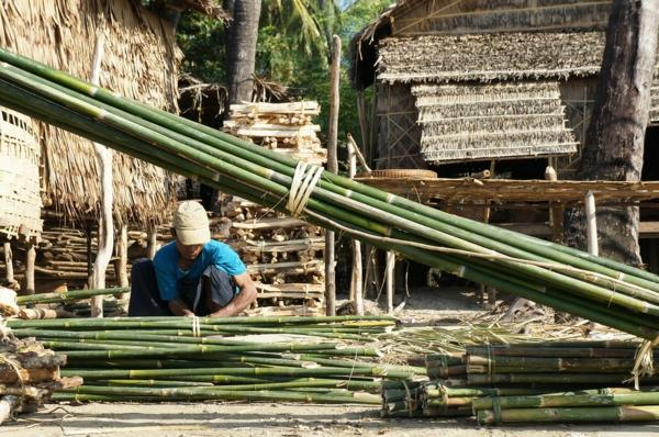 Wie schnell wächst Bambus Bambusmaterial