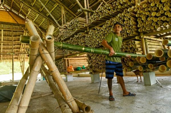 Wie schnell wächst Bambus Bauindustrie Bambus Wachstum