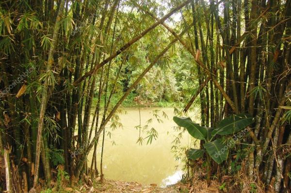 Wie schnell wächst Bambus Wasserfluss