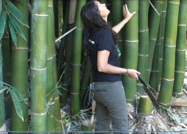 Wie schnell wächst Bambus und andere interessante Fakten