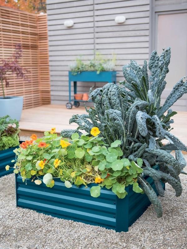 Zinkwanne dekorieren – Ideen und Tipps für eine rustikale Gartendeko hochbeet metall blau