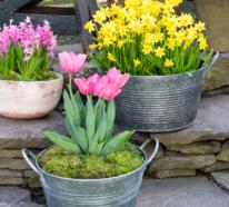 Zinkwanne dekorieren – Ideen und Tipps für eine rustikale Gartendeko
