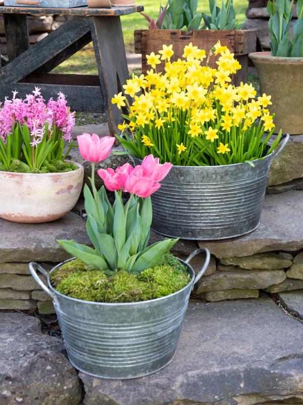 Zinkwanne dekorieren – Ideen und Tipps für eine rustikale Gartendeko tulpen blumen frühling schön
