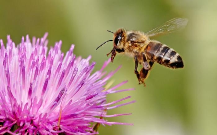gartengestaltung modern decking gartenweg anlege bienenfreundliche blueten
