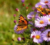 Gartengestaltung modern und natürlich- 33 frische Beispiele und Ideen für den Garten