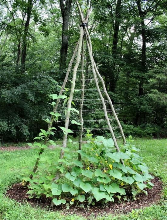 rankhilfe selber bauen gemüse anbauen