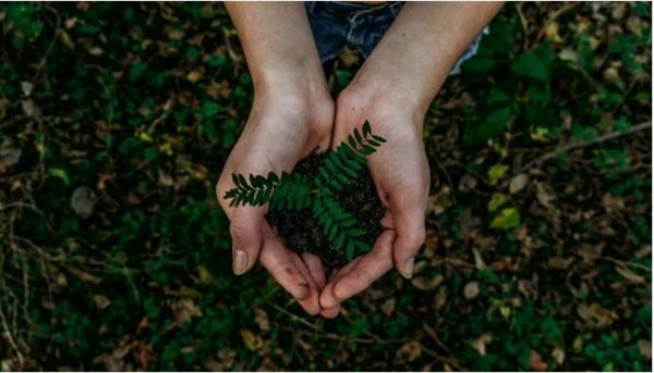 Bipa bald auch in Deutschland Nachhaltigkeit