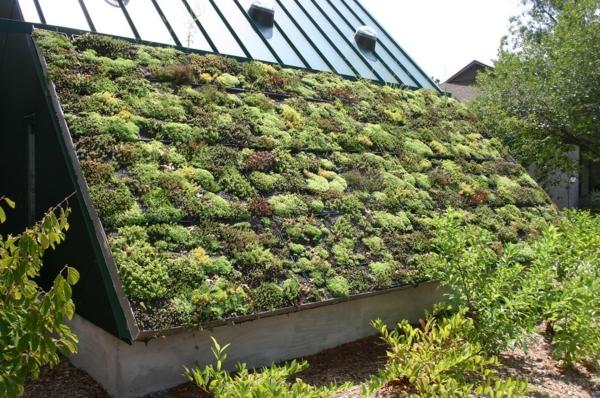 nachhaltig bauen und renovieren dachbegrünung
