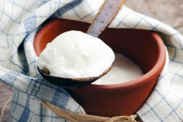 natürliche Fettverbrenner griechischer Joghurt wertvolles Probiotikum gut bei Heißhungerattacken