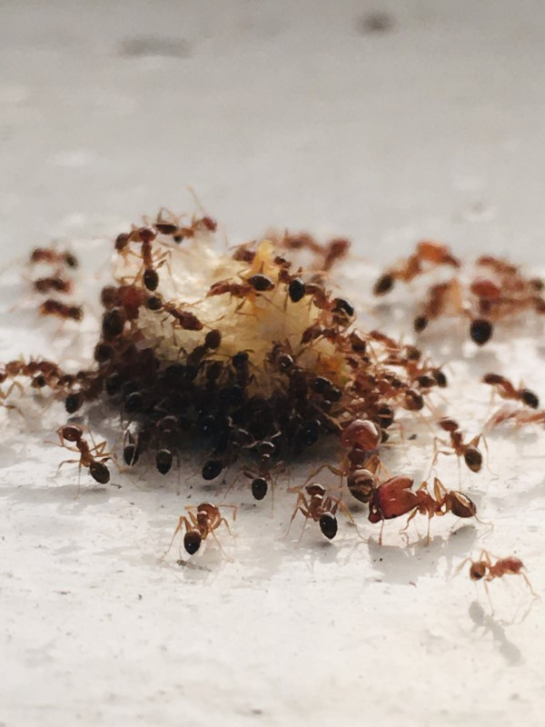 Ameisen vertreiben – so gewinnen Sie im Kampf gegen den Insektenstaat ameisen befallen brot