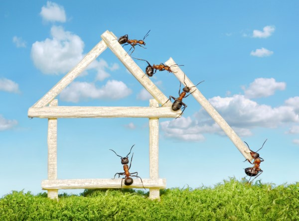 Ameisen vertreiben – so gewinnen Sie im Kampf gegen den Insektenstaat insekten im haus ameisen