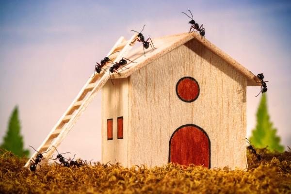 Ameisen vertreiben – so gewinnen Sie im Kampf gegen den Insektenstaat insekten im haus loswerden