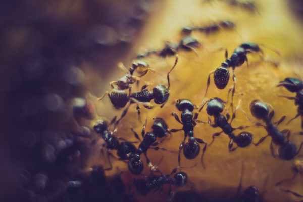 Ameisen vertreiben – so gewinnen Sie im Kampf gegen den Insektenstaat süßes und obst insekten