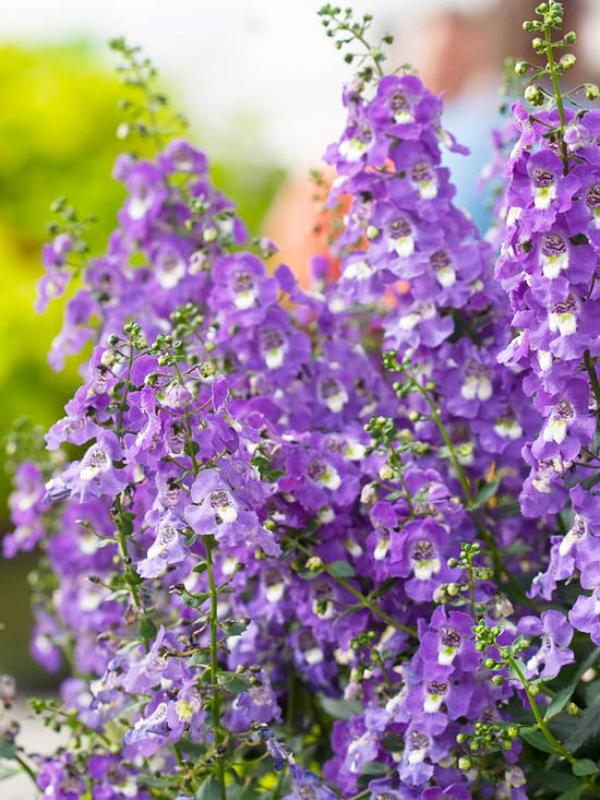 Garten im Sommer Blumengarten herrliche Blüten erfreuen Auge und Seele