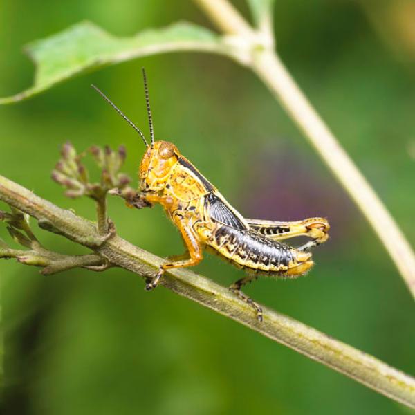 Garten im Sommer Schädlinge bekämpfen und sie loswerden