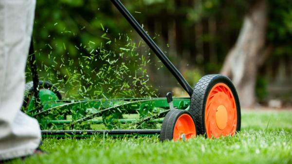 Garten im Sommer regelmäßig den Rasen mähen ein dichtes Gras im Outdoor-Bereich haben
