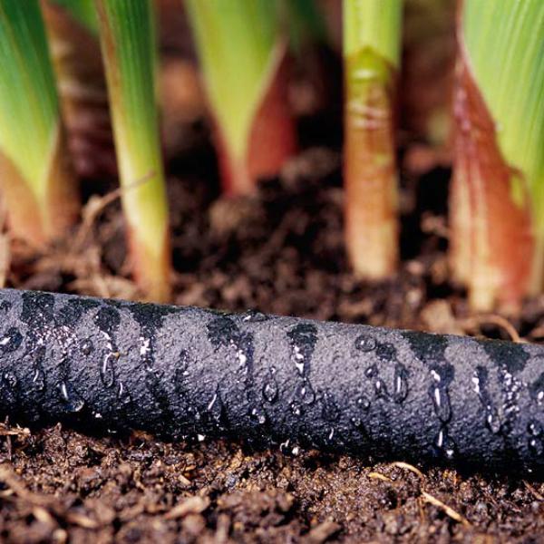 Garten im Sommer regelmäßig gießen am besten morgens Pflanzen brauchen Feuchtigkeit