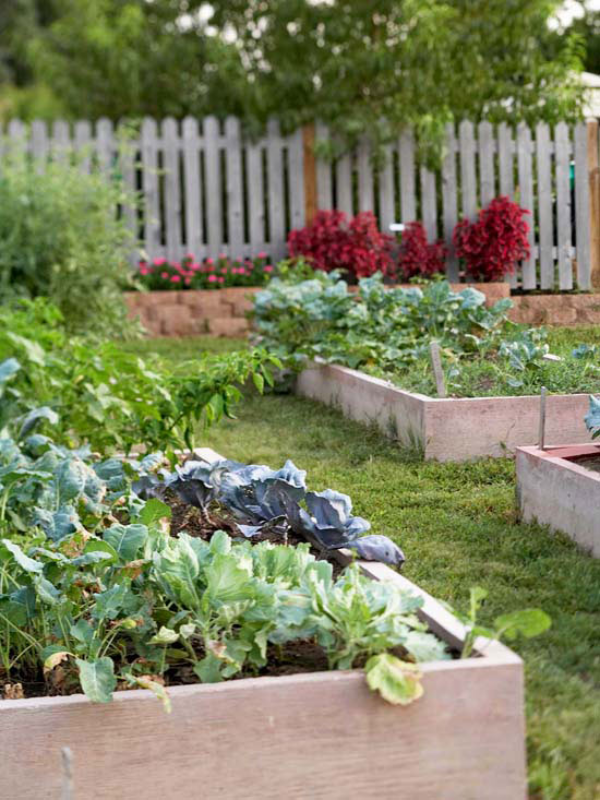 Garten im Sommer viel Arbeit Hochbeete Gemüse Kohl anbauen