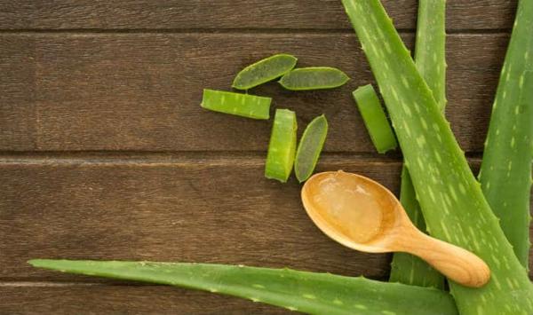 Hausmittel gegen Haarausfall Aloe vera