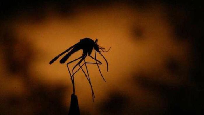Hausmittel gegen Mücken mückenstich behandeln muecke