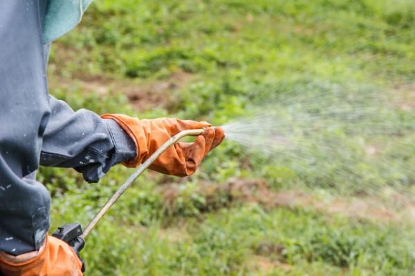 Sauerklee mit natürlichen Hausmitteln und umweltschonenden Methoden bekämpfen, Herbizide gezielt einsetzen