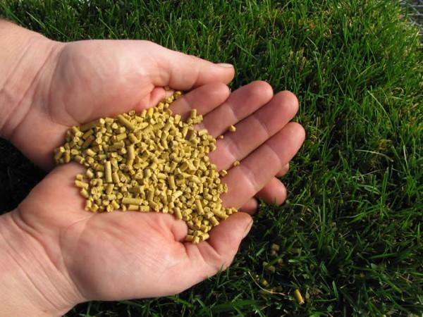 Hornsauerklee verwendet natürliche Hausmittel und umweltfreundliche Methoden, um Maisklebermehl-Granulat zu bekämpfen